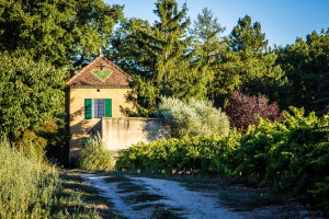 Little House in the Vineyards 'Cabanon St. Félix'