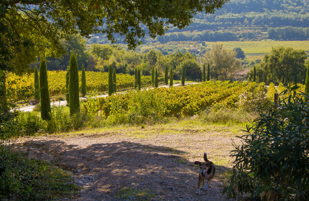 Autumn in Provence (28)